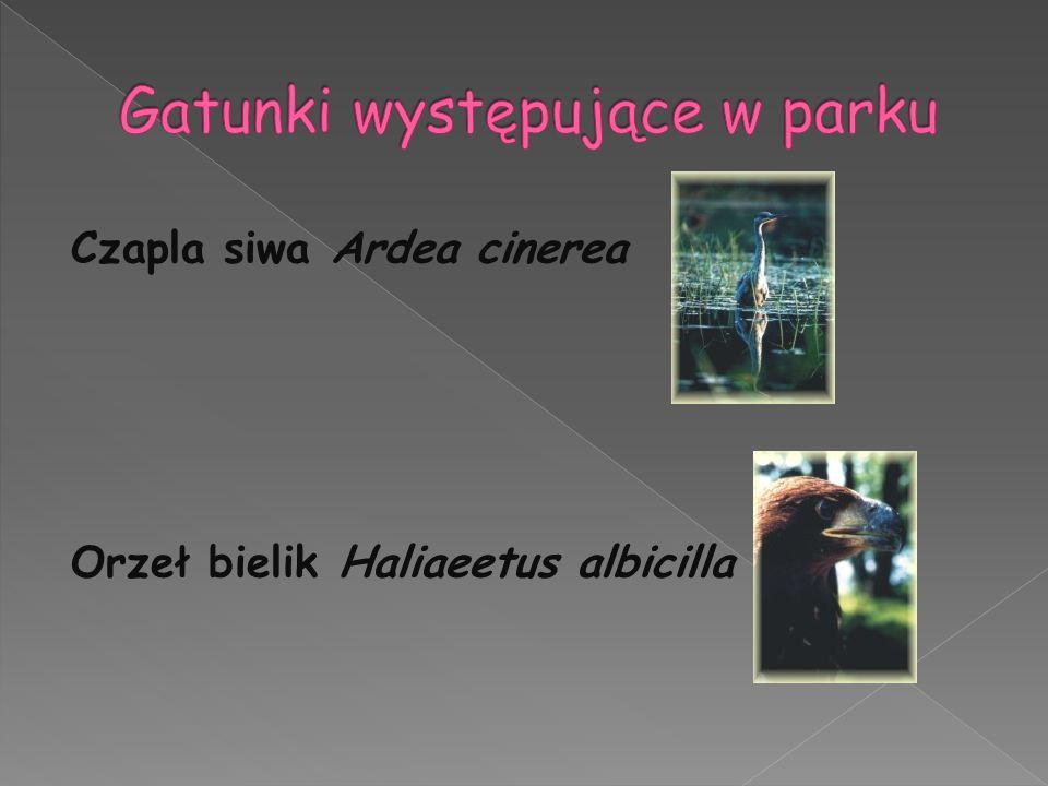 Gatunki występujące w parku