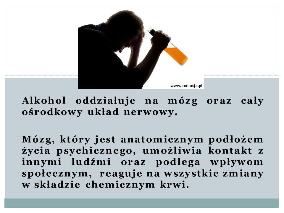 Alkohol oddziałuje na mózg oraz cały ośrodkowy układ nerwowy.