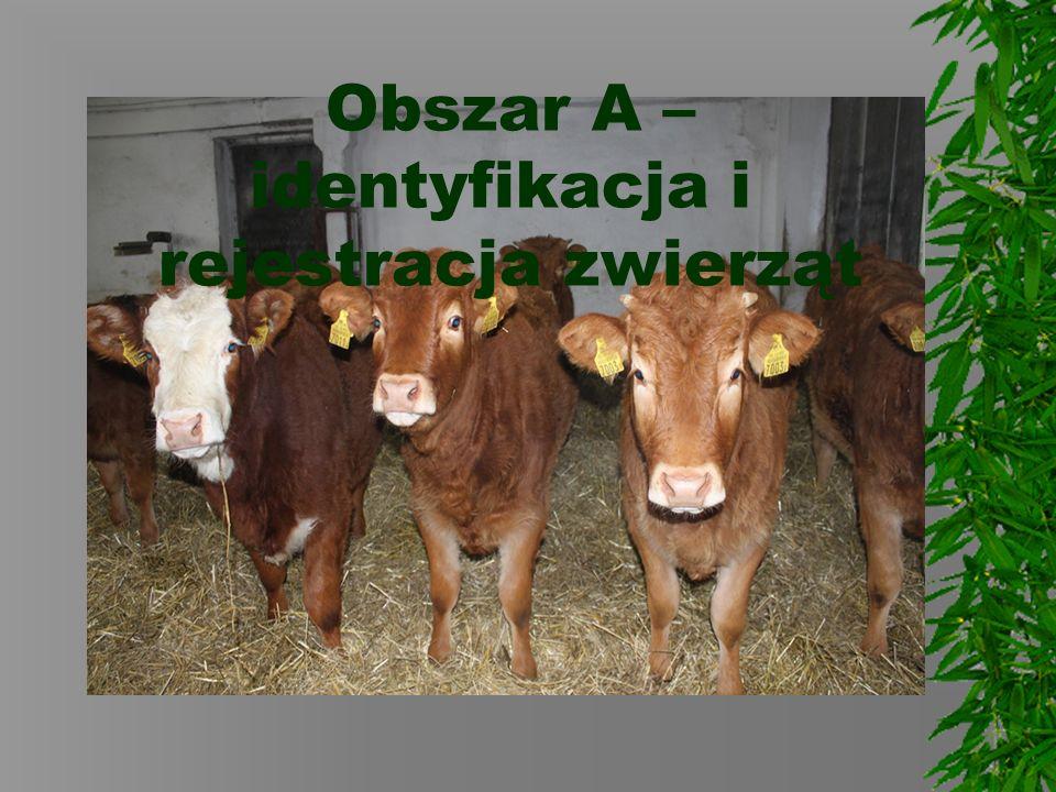 Obszar A – identyfikacja i rejestracja zwierząt