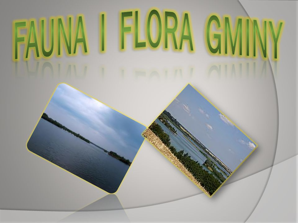 FAUNA I FLORA GMINY