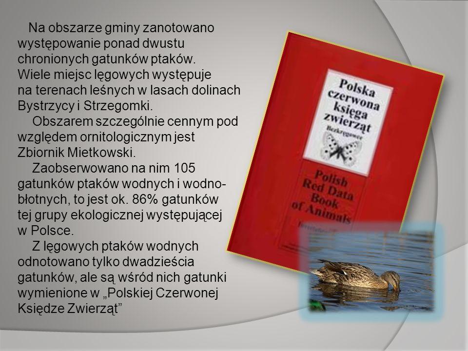 Na obszarze gminy zanotowano występowanie ponad dwustu chronionych gatunków ptaków. Wiele miejsc lęgowych występuje na terenach leśnych w lasach dolinach Bystrzycy i Strzegomki. Obszarem szczególnie cennym pod względem ornitologicznym jest Zbiornik Mietkowski. Zaobserwowano na nim 105 gatunków ptaków wodnych i wodno-błotnych, to jest ok. 86% gatunków tej grupy ekologicznej występującej w Polsce.