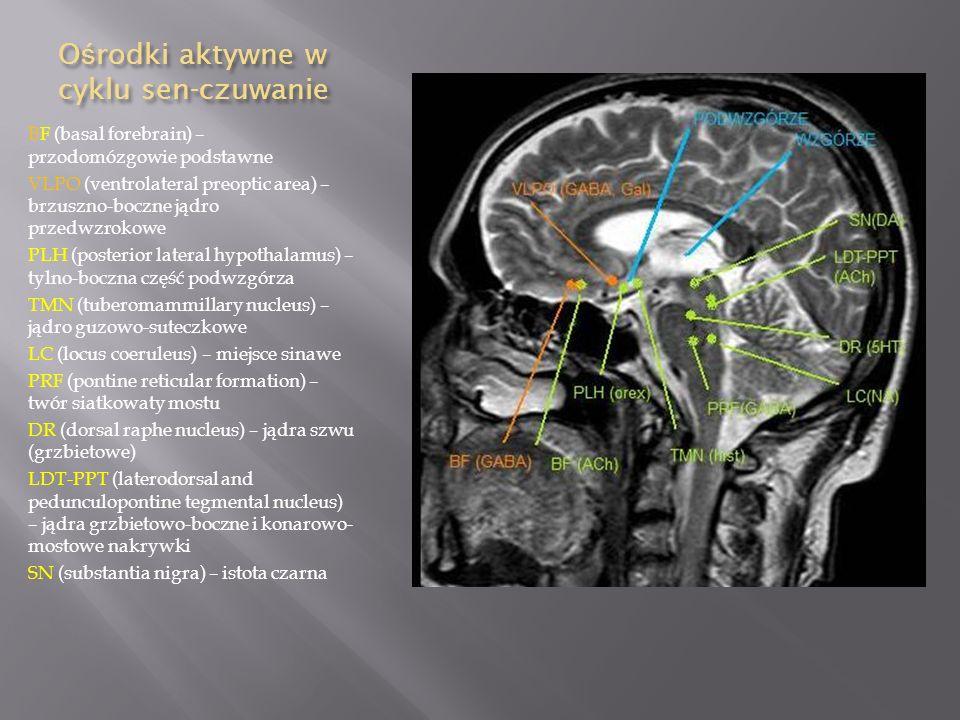 Ośrodki aktywne w cyklu sen-czuwanie