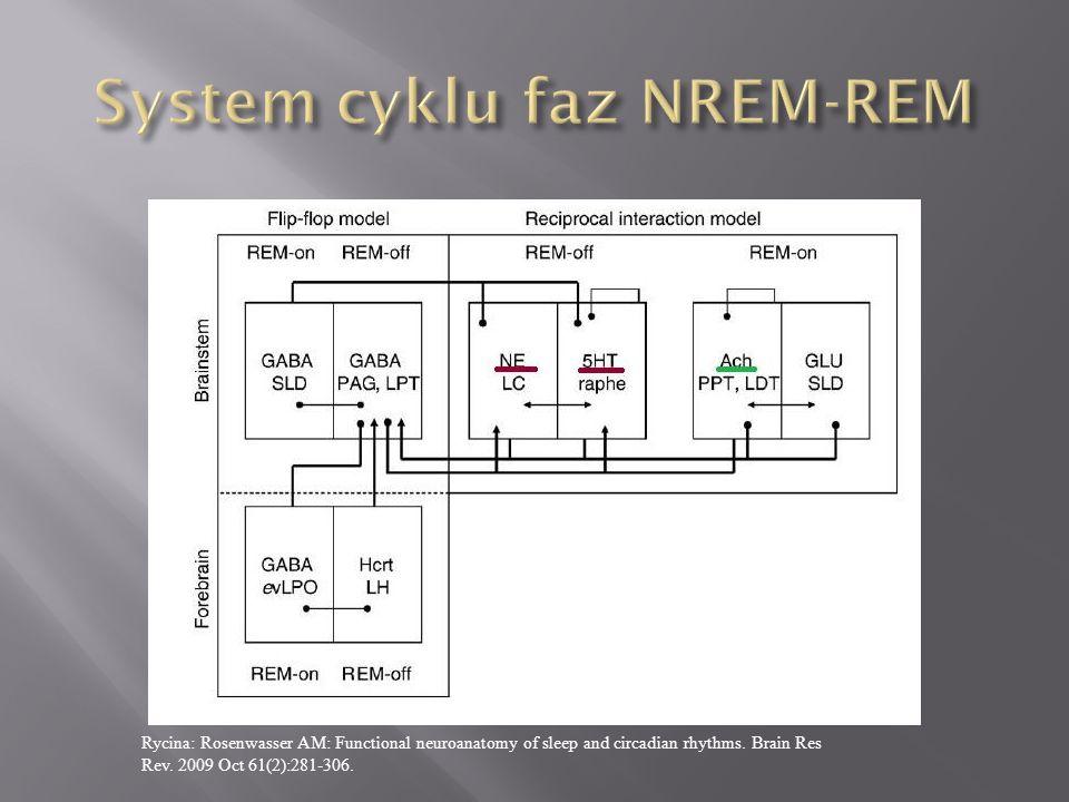 System cyklu faz NREM-REM