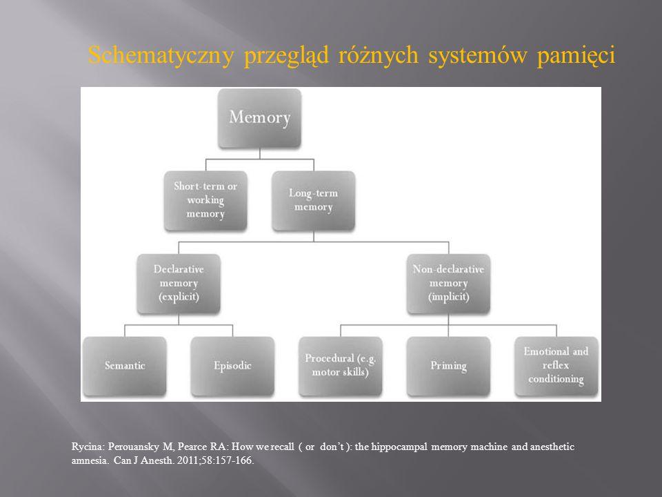 Schematyczny przegląd różnych systemów pamięci