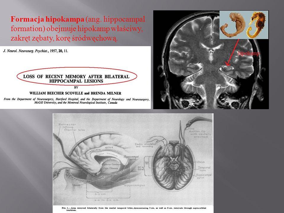 Formacja hipokampa (ang
