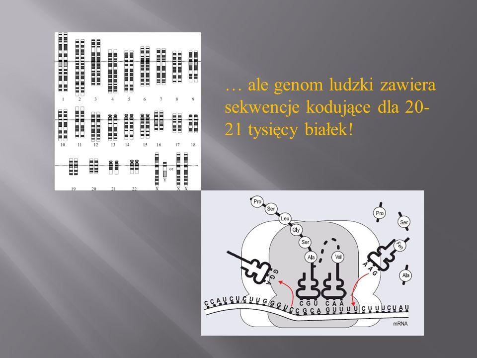 … ale genom ludzki zawiera sekwencje kodujące dla 20-21 tysięcy białek!
