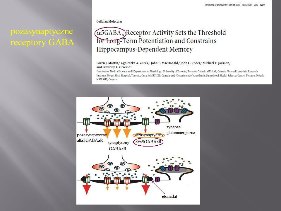 pozasynaptyczne receptory GABA