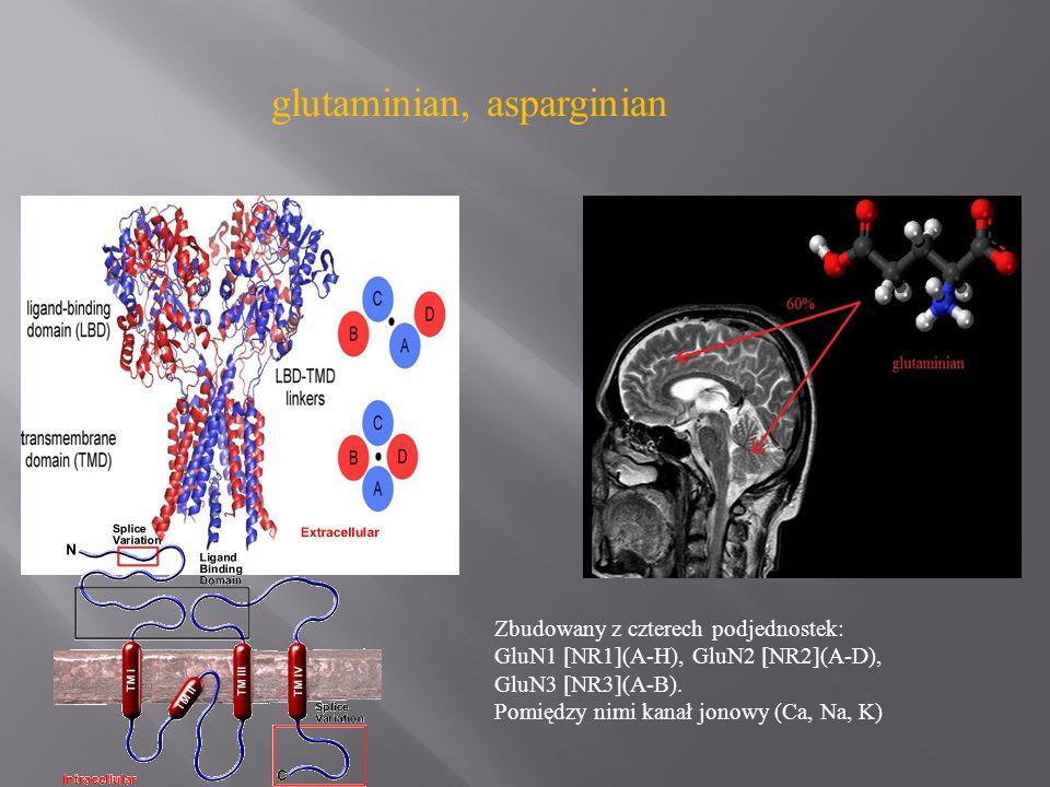 glutaminian, asparginian