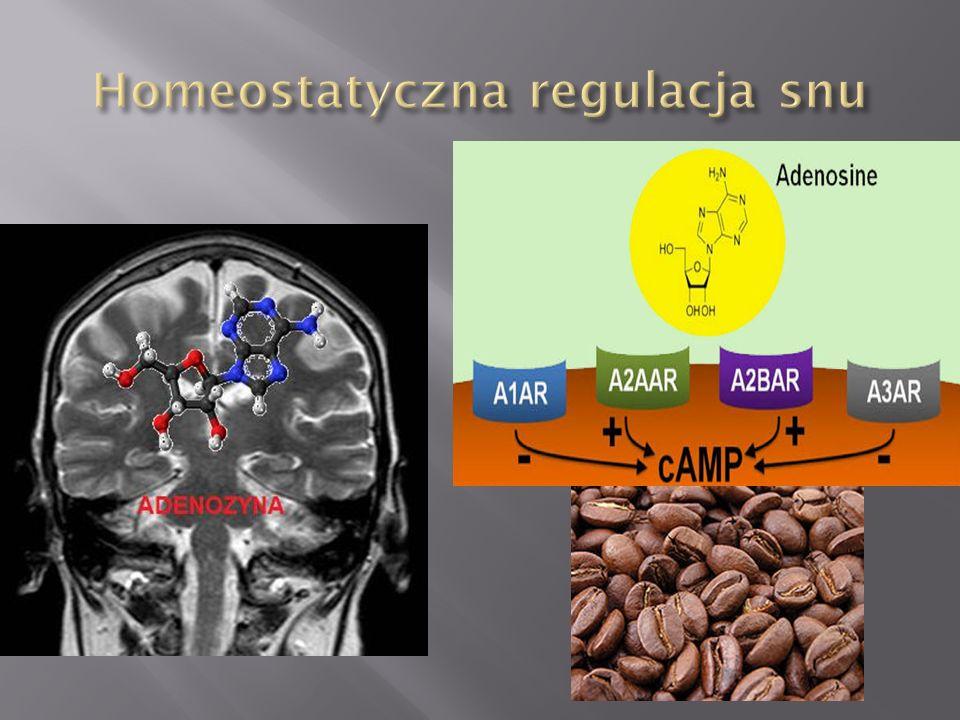 Homeostatyczna regulacja snu