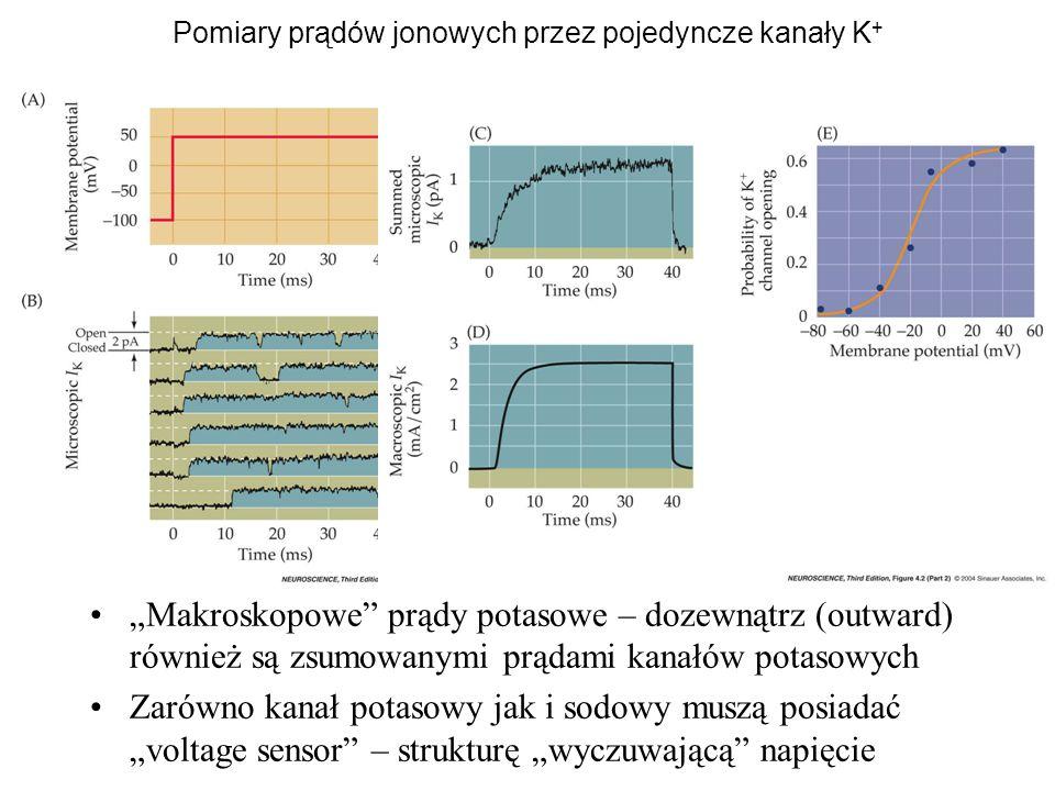 Pomiary prądów jonowych przez pojedyncze kanały K+