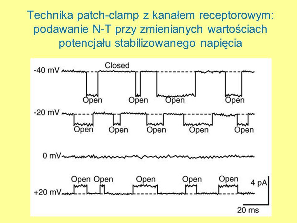 Technika patch-clamp z kanałem receptorowym: podawanie N-T przy zmienianych wartościach potencjału stabilizowanego napięcia