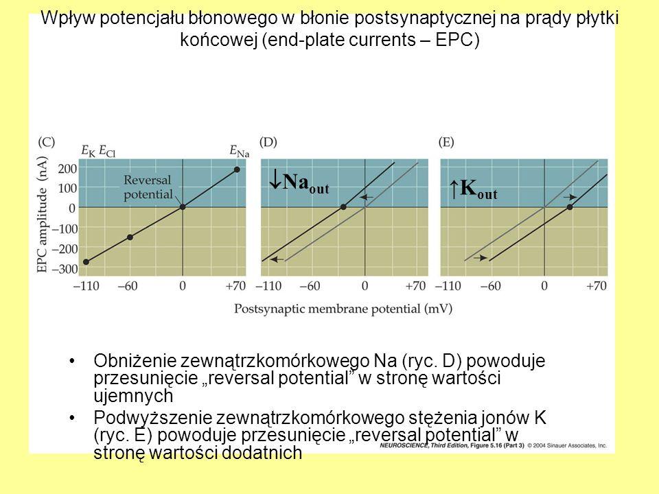 Wpływ potencjału błonowego w błonie postsynaptycznej na prądy płytki końcowej (end-plate currents – EPC)
