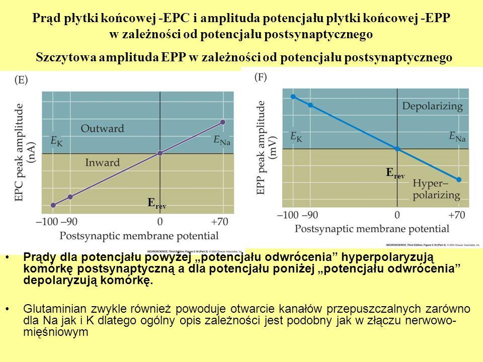 Szczytowa amplituda EPP w zależności od potencjału postsynaptycznego
