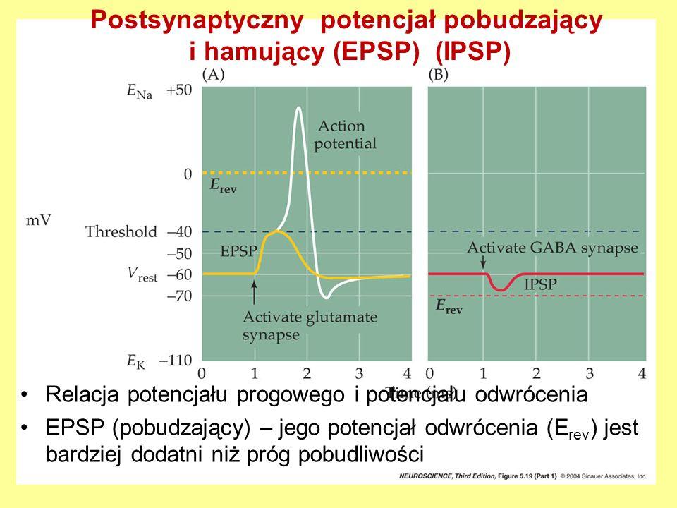 Postsynaptyczny potencjał pobudzający i hamujący (EPSP) (IPSP)