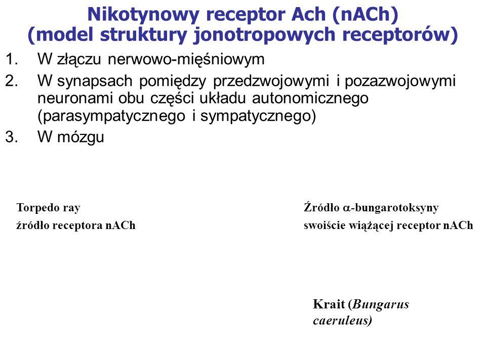 Nikotynowy receptor Ach (nACh) (model struktury jonotropowych receptorów)