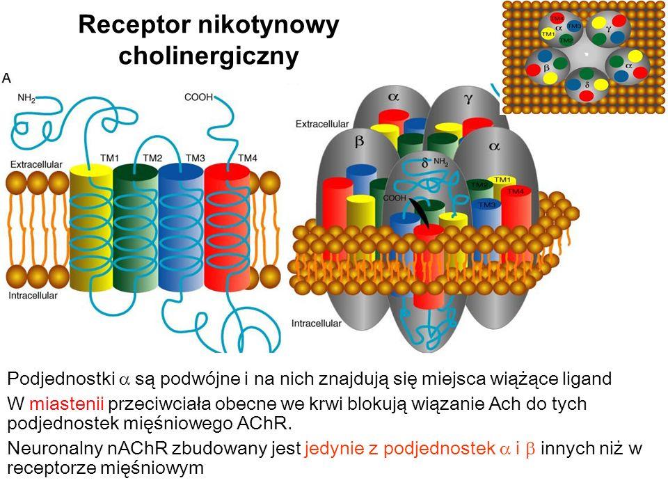 Receptor nikotynowy cholinergiczny