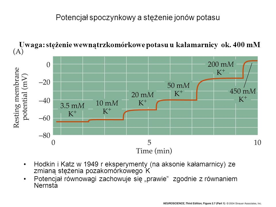 Potencjał spoczynkowy a stężenie jonów potasu