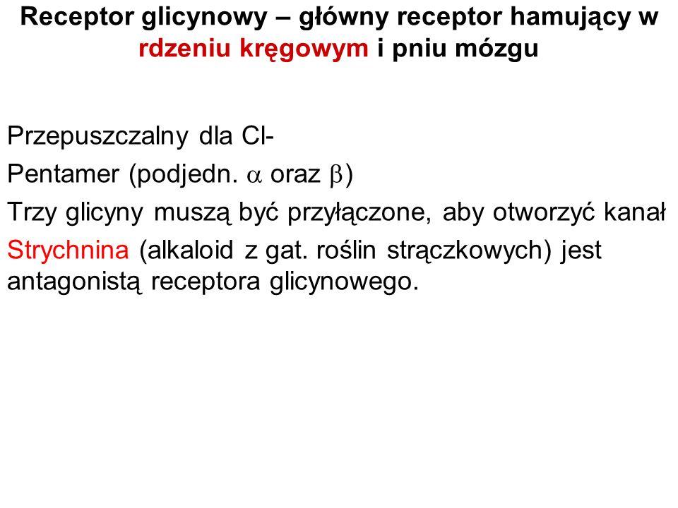 Receptor glicynowy – główny receptor hamujący w rdzeniu kręgowym i pniu mózgu
