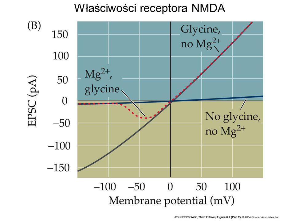 Właściwości receptora NMDA