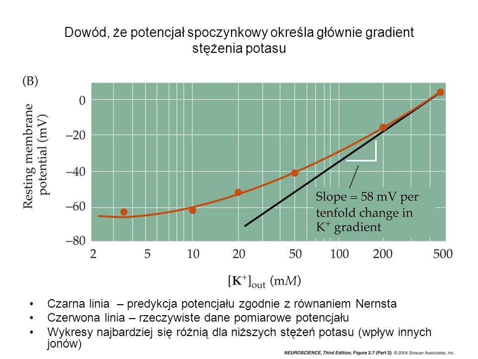 Dowód, że potencjał spoczynkowy określa głównie gradient stężenia potasu