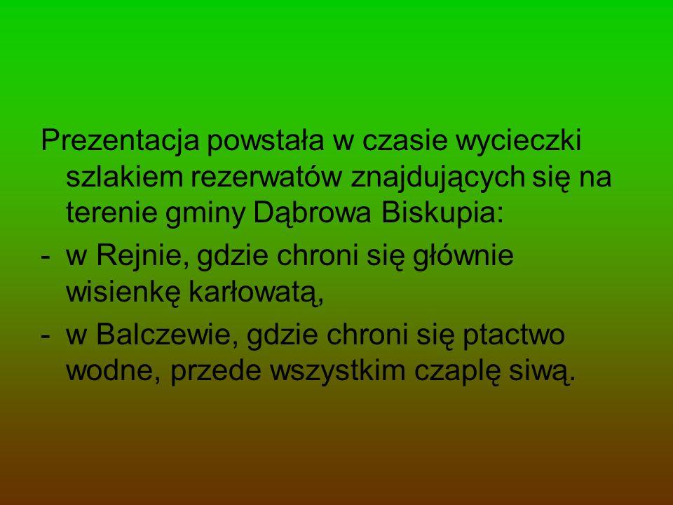 Prezentacja powstała w czasie wycieczki szlakiem rezerwatów znajdujących się na terenie gminy Dąbrowa Biskupia: