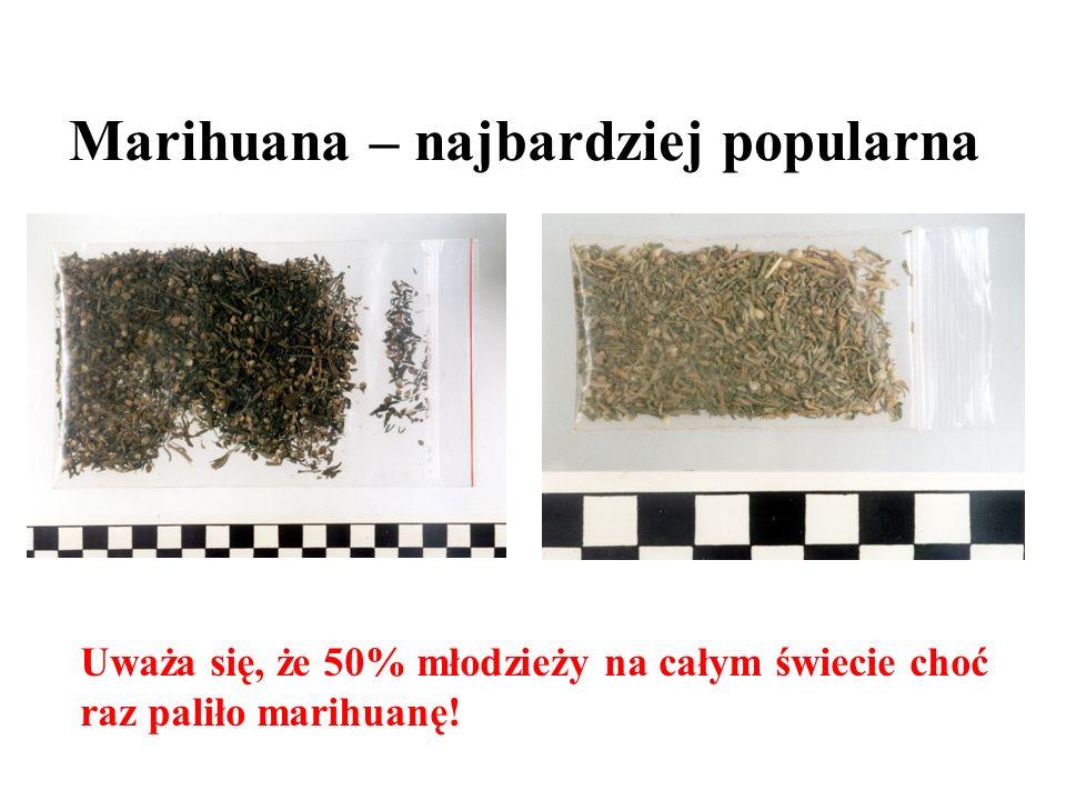 Marihuana – najbardziej popularna