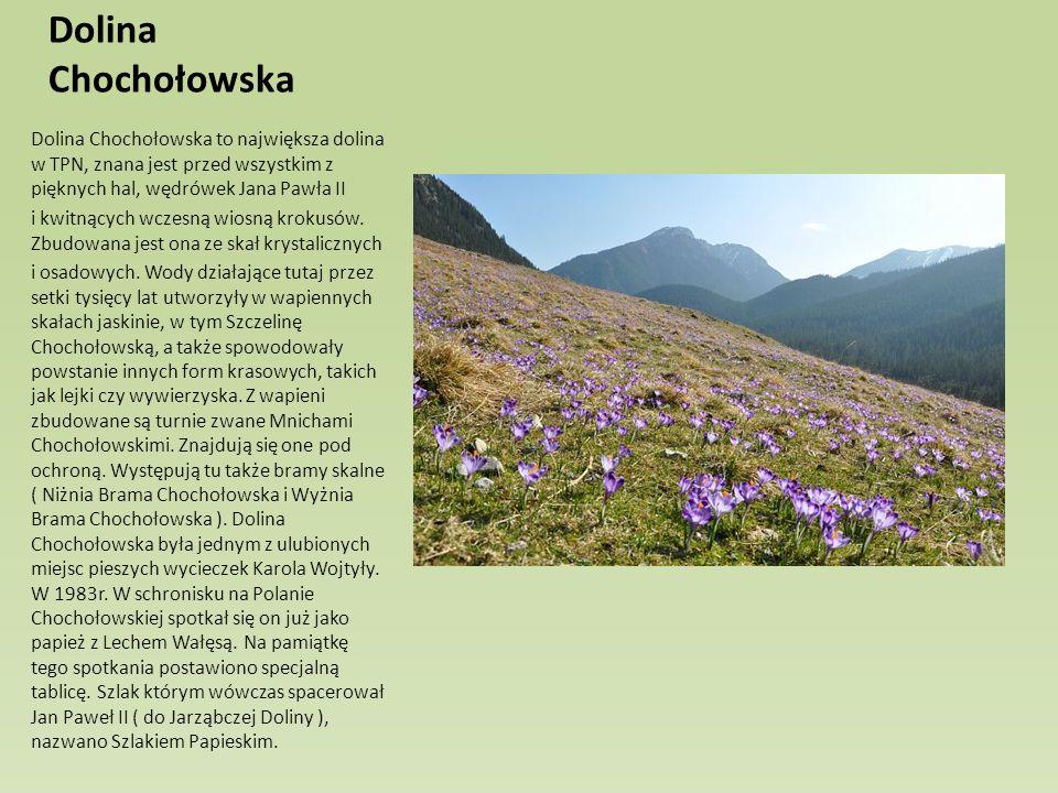 Dolina Chochołowska Dolina Chochołowska to największa dolina w TPN, znana jest przed wszystkim z pięknych hal, wędrówek Jana Pawła II.