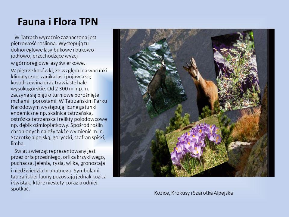 Fauna i Flora TPN W Tatrach wyraźnie zaznaczona jest piętrowość roślinna. Występują tu dolnoreglowe lasy bukowe i bukowo-jodłowo, przechodzące wyżej.