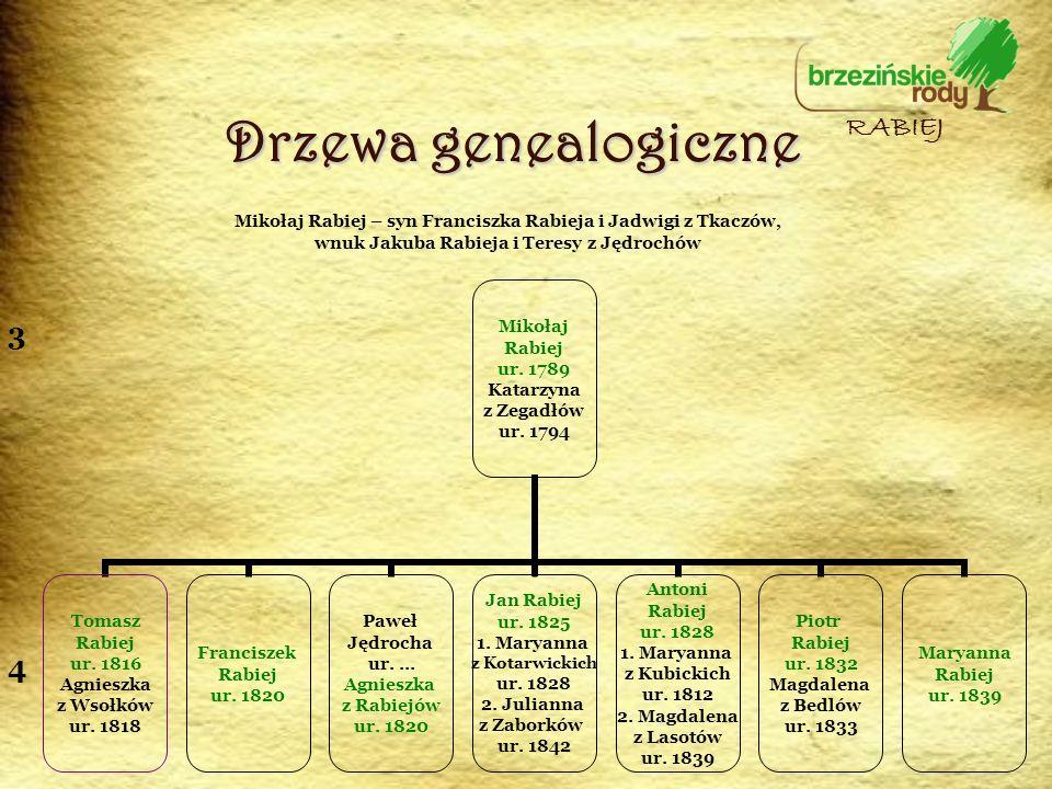 Drzewa genealogiczne RABIEJ 3 4