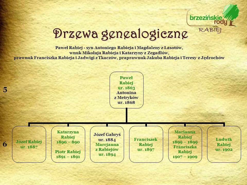 Drzewa genealogiczne RABIEJ 5 6
