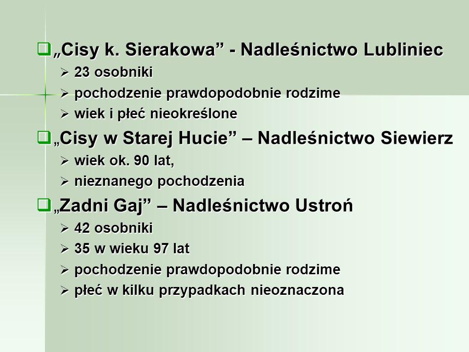 """""""Cisy k. Sierakowa - Nadleśnictwo Lubliniec"""