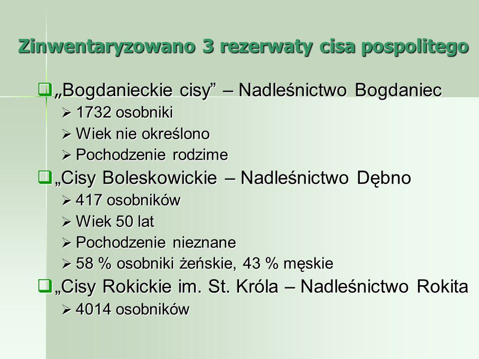 Zinwentaryzowano 3 rezerwaty cisa pospolitego