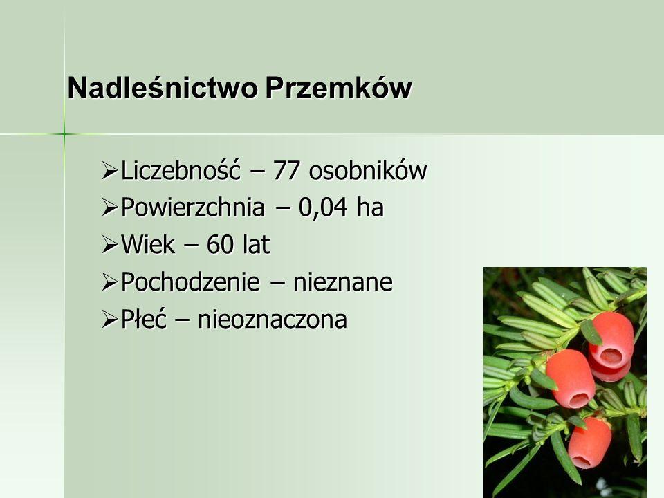 Nadleśnictwo Przemków