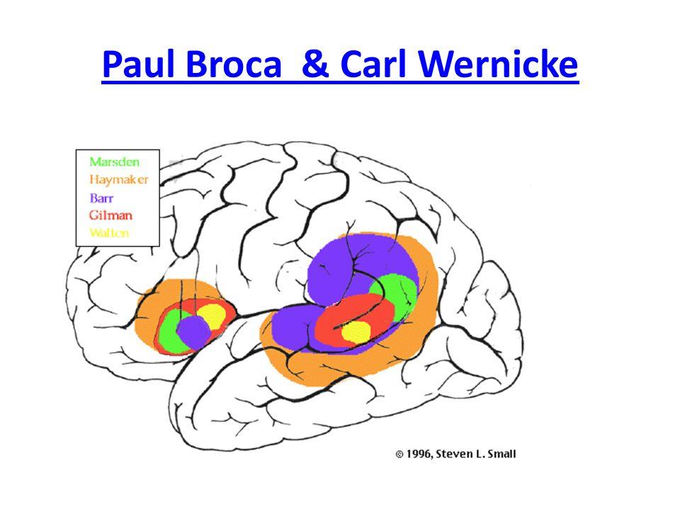 Paul Broca & Carl Wernicke