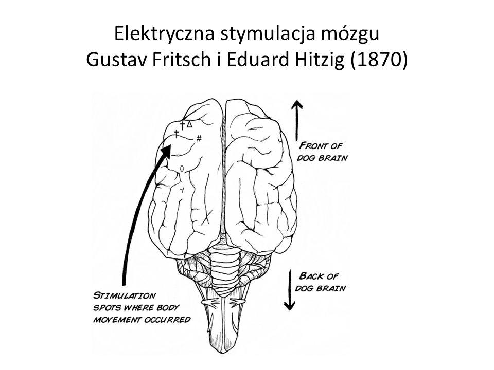 Elektryczna stymulacja mózgu Gustav Fritsch i Eduard Hitzig (1870)