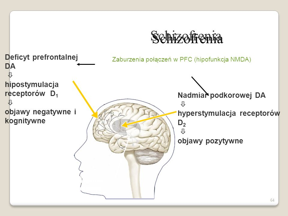 Zaburzenia połączeń w PFC (hipofunkcja NMDA)