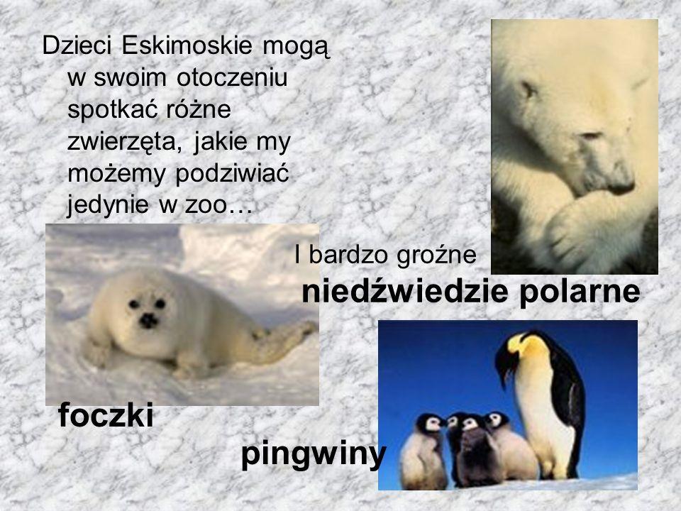 Dzieci Eskimoskie mogą w swoim otoczeniu spotkać różne zwierzęta, jakie my możemy podziwiać jedynie w zoo…