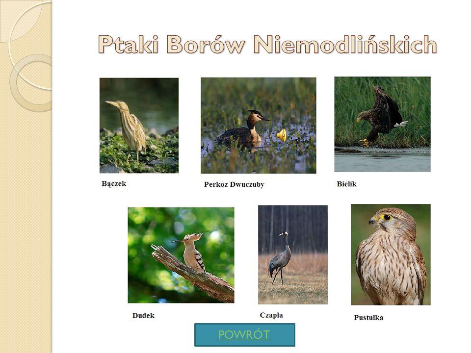 Ptaki Borów Niemodlińskich