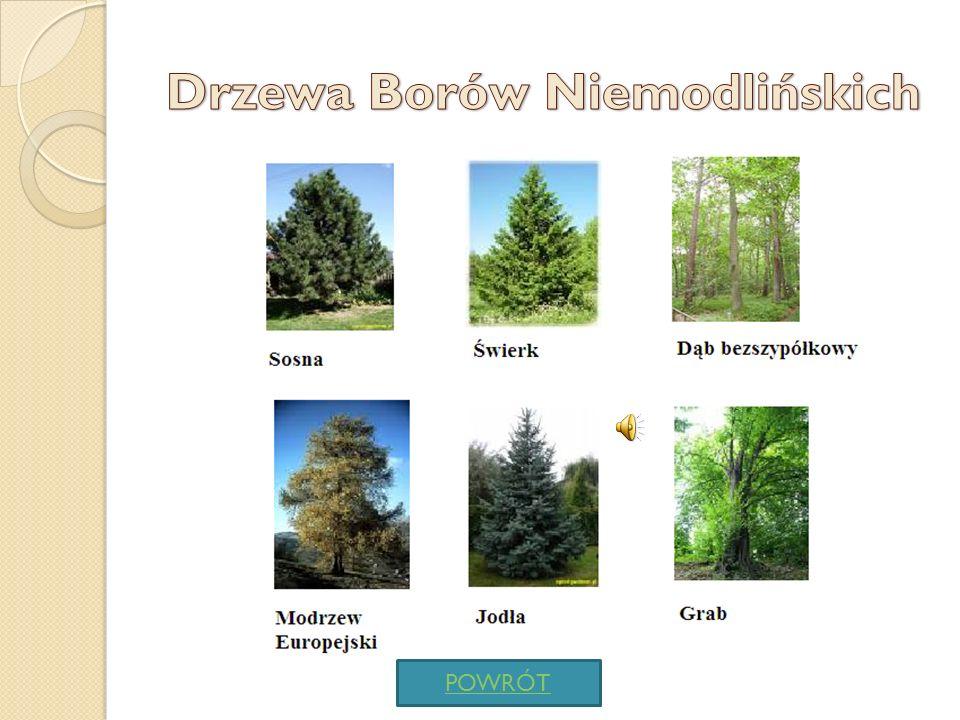 Drzewa Borów Niemodlińskich