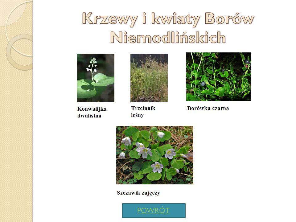 Krzewy i kwiaty Borów Niemodlińskich