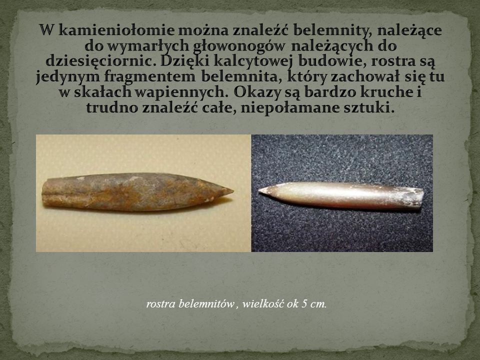 W kamieniołomie można znaleźć belemnity, należące do wymarłych głowonogów należących do dziesięciornic. Dzięki kalcytowej budowie, rostra są jedynym fragmentem belemnita, który zachował się tu w skałach wapiennych. Okazy są bardzo kruche i trudno znaleźć całe, niepołamane sztuki.