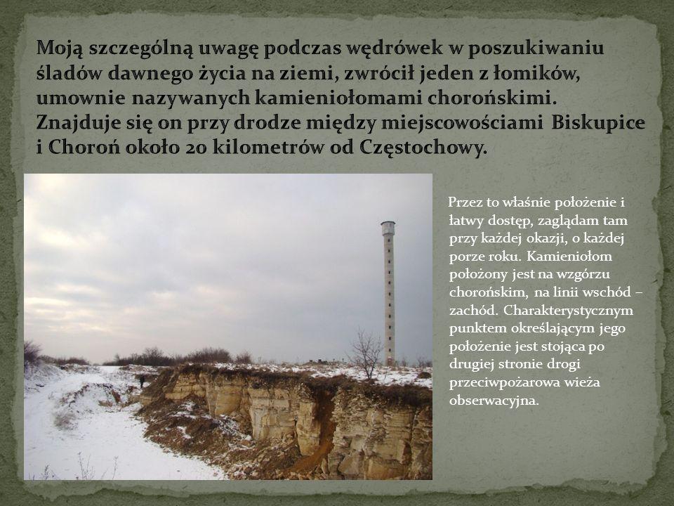 Moją szczególną uwagę podczas wędrówek w poszukiwaniu śladów dawnego życia na ziemi, zwrócił jeden z łomików, umownie nazywanych kamieniołomami chorońskimi. Znajduje się on przy drodze między miejscowościami Biskupice i Choroń około 20 kilometrów od Częstochowy.