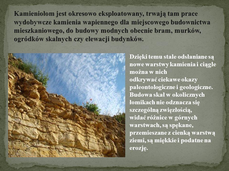 Kamieniołom jest okresowo eksploatowany, trwają tam prace wydobywcze kamienia wapiennego dla miejscowego budownictwa mieszkaniowego, do budowy modnych obecnie bram, murków, ogródków skalnych czy elewacji budynków.