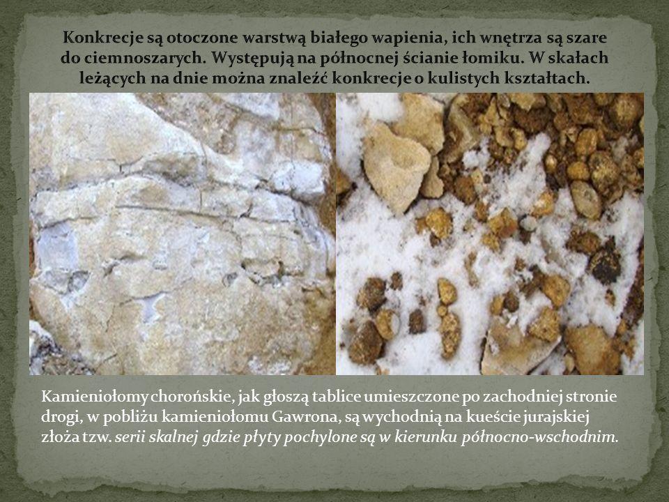 Konkrecje są otoczone warstwą białego wapienia, ich wnętrza są szare do ciemnoszarych. Występują na północnej ścianie łomiku. W skałach leżących na dnie można znaleźć konkrecje o kulistych kształtach.