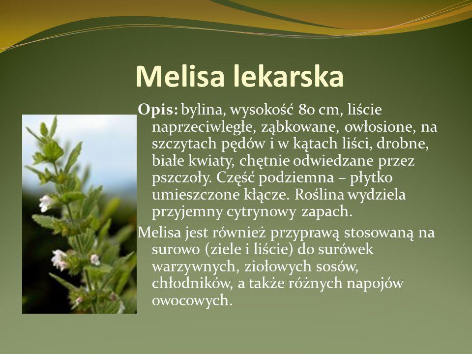 Melisa lekarska