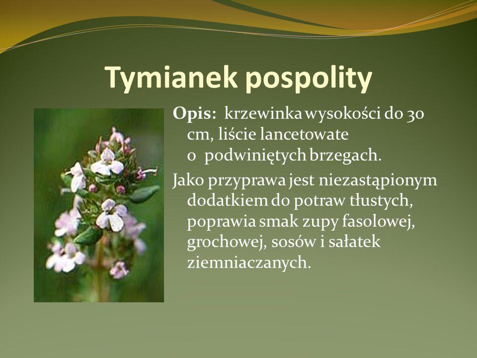 Tymianek pospolity Opis: krzewinka wysokości do 30 cm, liście lancetowate o podwiniętych brzegach.