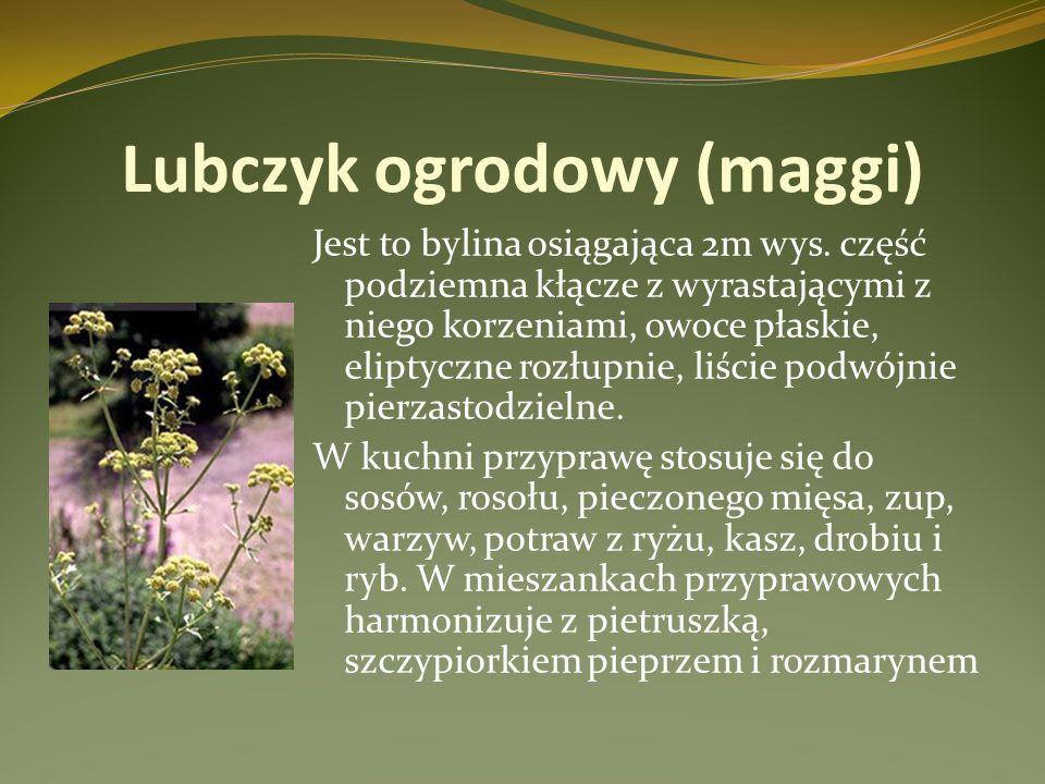Lubczyk ogrodowy (maggi)