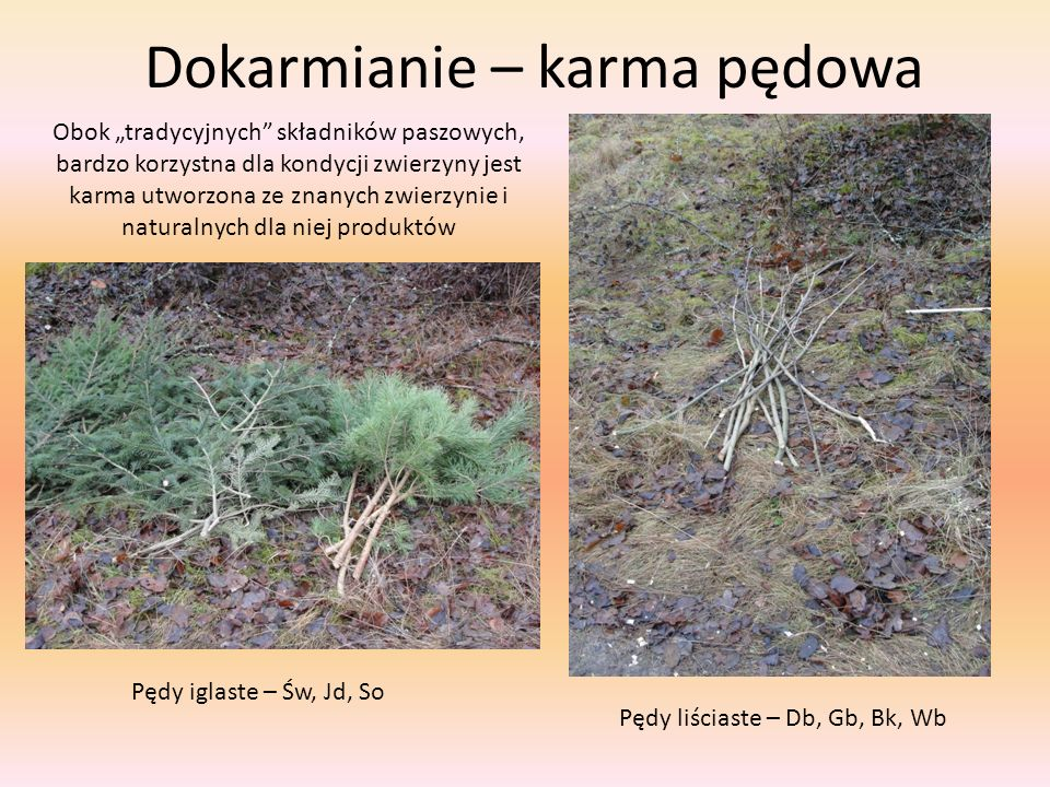 Dokarmianie – karma pędowa