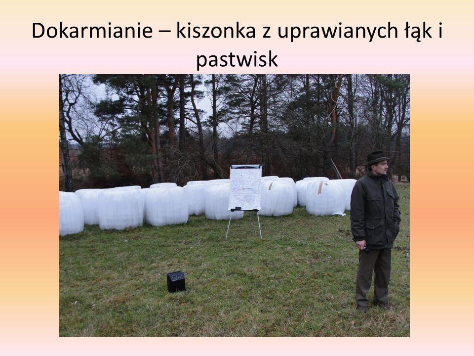 Dokarmianie – kiszonka z uprawianych łąk i pastwisk