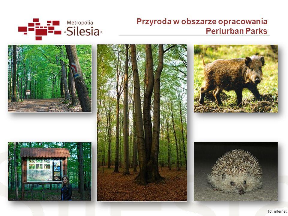 Przyroda w obszarze opracowania Periurban Parks